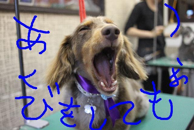 無事!!_b0130018_1784664.jpg