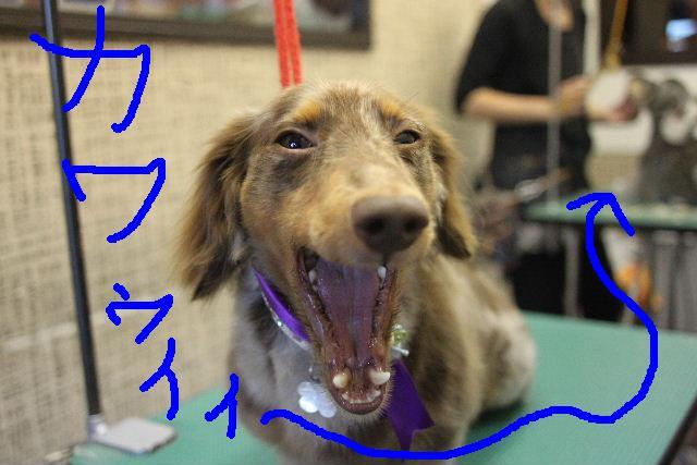 無事!!_b0130018_178556.jpg