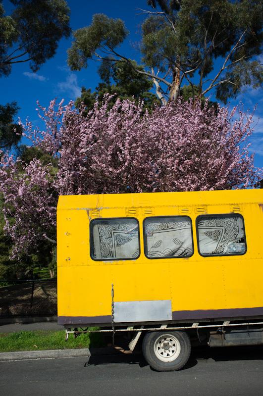 タスマニアに春が来た?_f0137354_21174368.jpg