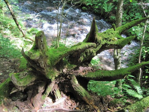 ANCIENT HOTEL ~ 竜返しの滝で涼む♪_f0236260_2392637.jpg