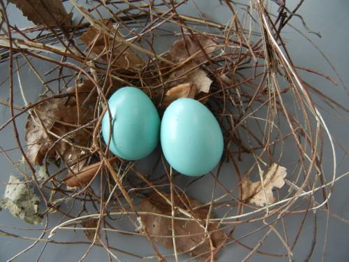 ロック鳥の卵 フォース・オブ・ウィル通販・販売 ガッチャJP