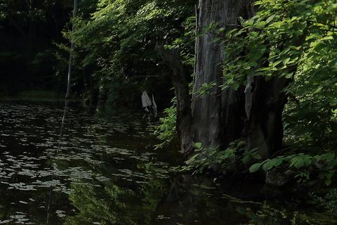 松川姫の恐怖_f0075075_20565412.jpg