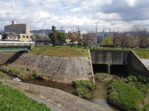 今さらですが七瀬川歩きの報告です_e0008880_21404224.jpg