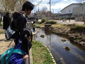 今さらですが七瀬川歩きの報告です_e0008880_21424210.jpg