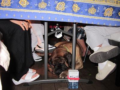 Partyの時はテーブルの下に?_e0192217_919686.jpg