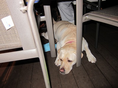 Partyの時はテーブルの下に?_e0192217_9315726.jpg