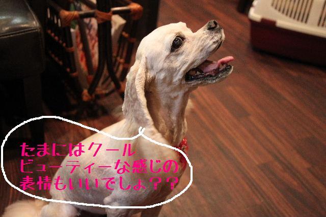 b0130018_2129381.jpg