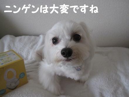 b0193480_162977.jpg