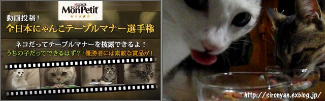 全日本にゃんこテーブルマナー選手権 投稿_a0159490_1057991.png