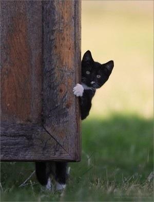 母猫の願い_f0168392_21202812.jpg
