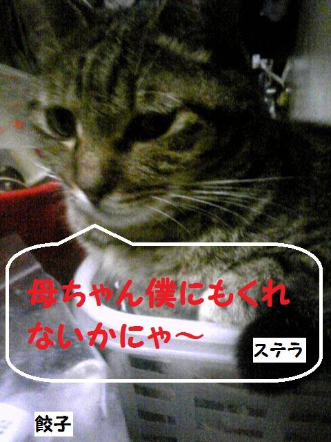 a0232197_2002758.jpg