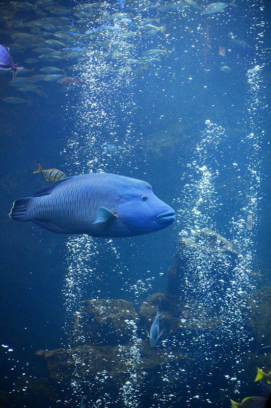 京都水族館 其の二_f0032011_19441190.jpg