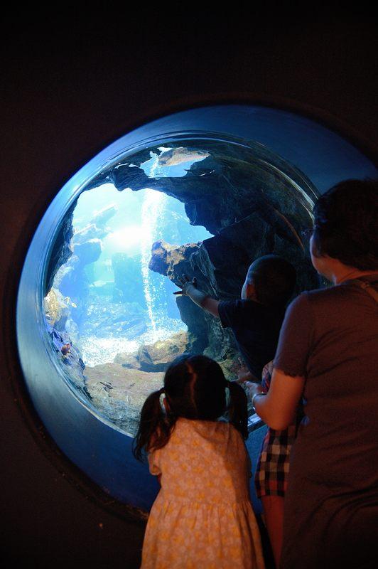 京都水族館 其の二_f0032011_19452695.jpg