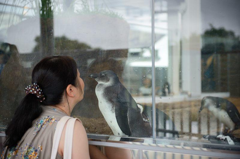 京都水族館 其の二_f0032011_1945426.jpg