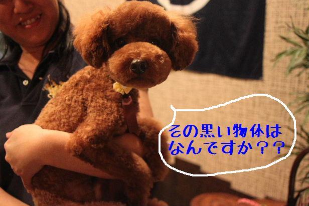 b0130018_2216957.jpg