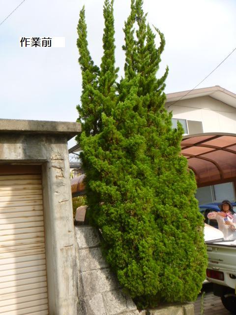 植木剪定_c0186441_6473970.jpg