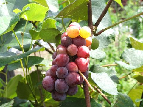 秋の収穫_a0233551_2027119.jpg