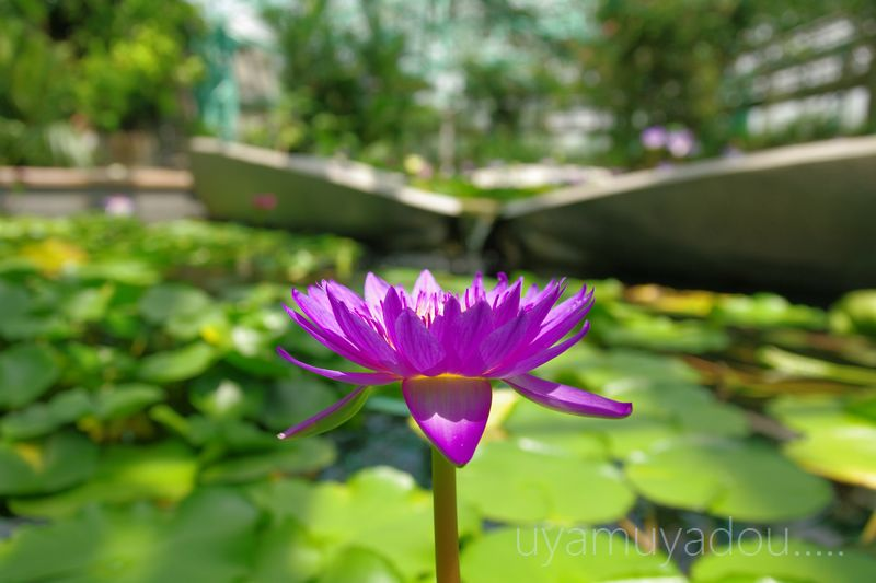 琵琶湖水生植物園_a0157263_2239426.jpg