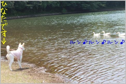 f0164479_0271548.jpg