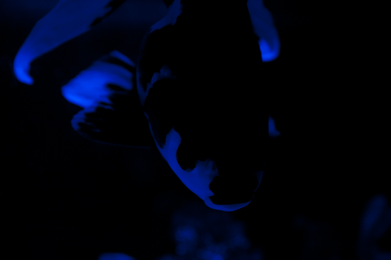 NIGHT DANCE_a0246781_19552812.jpg