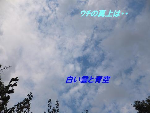 f0179203_16594513.jpg