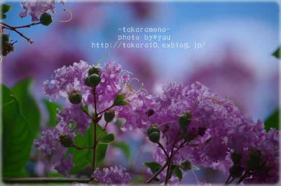 f0111908_19132687.jpg