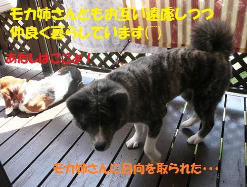 f0121712_17213248.jpg