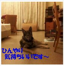 b0207320_1245437.jpg