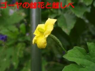 b0008825_14463341.jpg