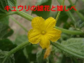 b0008825_14465833.jpg