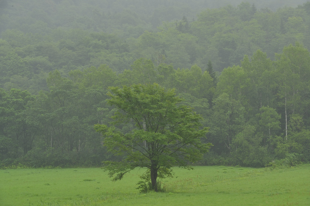 雨の日_f0050534_7161567.jpg