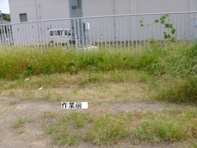 駐車場草刈り_c0186441_22184093.jpg