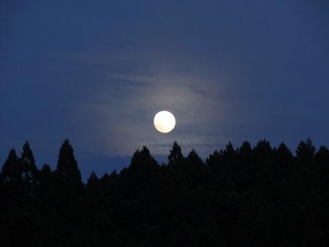 夕暮れお月さん_a0233551_21532527.jpg