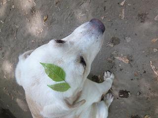 with dog  猛暑のドッグラン♪_a0165160_612857.jpg