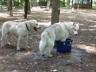 with dog  猛暑のドッグラン♪_a0165160_6133948.jpg