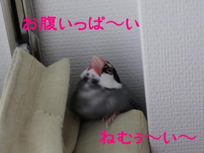 b0158061_20123040.jpg