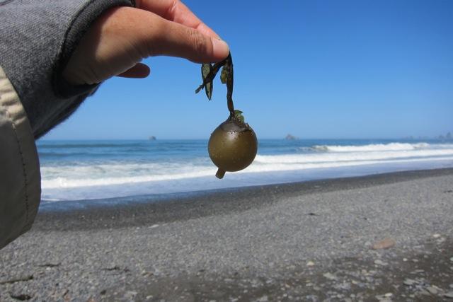 海で拾った「気になる形」_d0244370_15125456.jpg