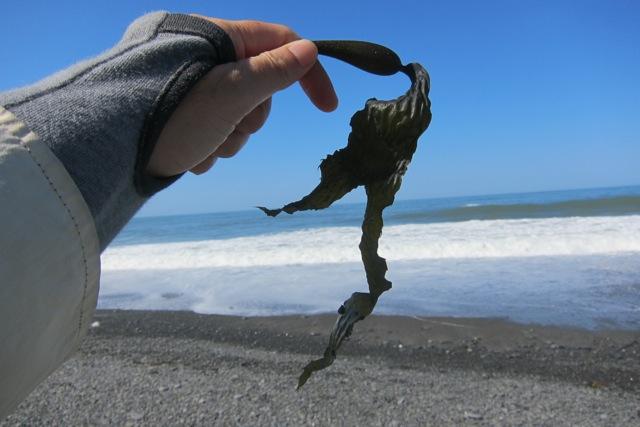 海で拾った「気になる形」_d0244370_15125720.jpg