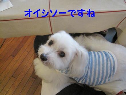 b0193480_2012290.jpg