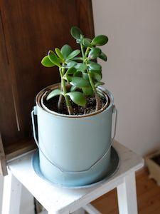 植物_f0146385_111045.jpg