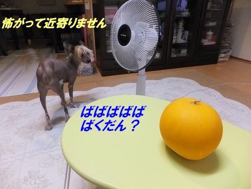 f0179203_1813326.jpg