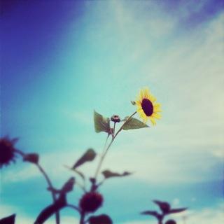 さよなら夏の日_c0197505_1312825.jpg