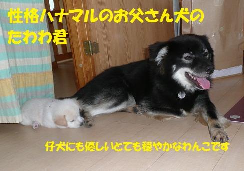 f0121712_22283654.jpg