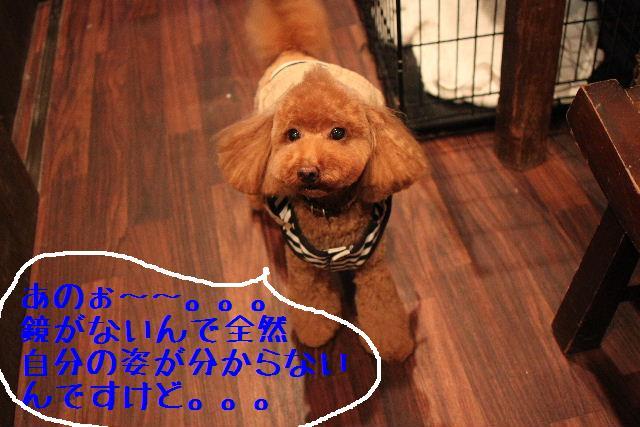 おはよぉ~ございます!!_b0130018_7401460.jpg