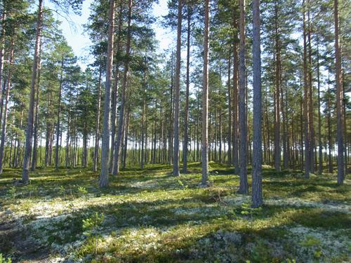 フィンランドの森_e0123419_231140.jpg