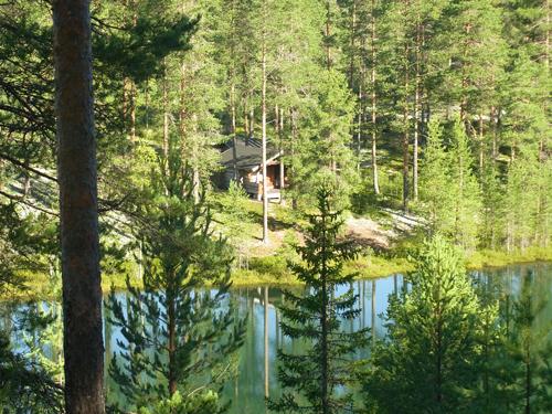 フィンランドの森_e0123419_2312341.jpg