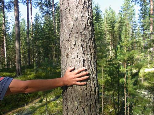 フィンランドの森_e0123419_2314218.jpg