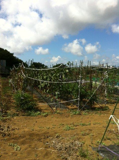 人参の間引き&ハーブ達への給水&収穫 今日はSさんがボランティア_c0222448_12195094.jpg