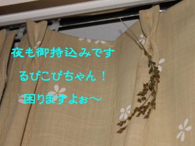 b0158061_2154896.jpg