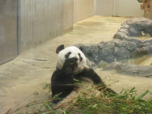 動物園~♪_c0231772_11421051.jpg